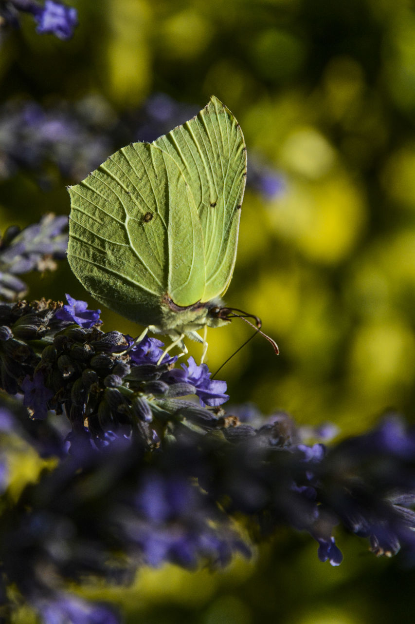 insect, one animal, animal themes, animals in the wild, nature, close-up, green color, no people, leaf, day, growth, outdoors, focus on foreground, fragility, animal wildlife, beauty in nature, butterfly - insect, plant, flower, freshness