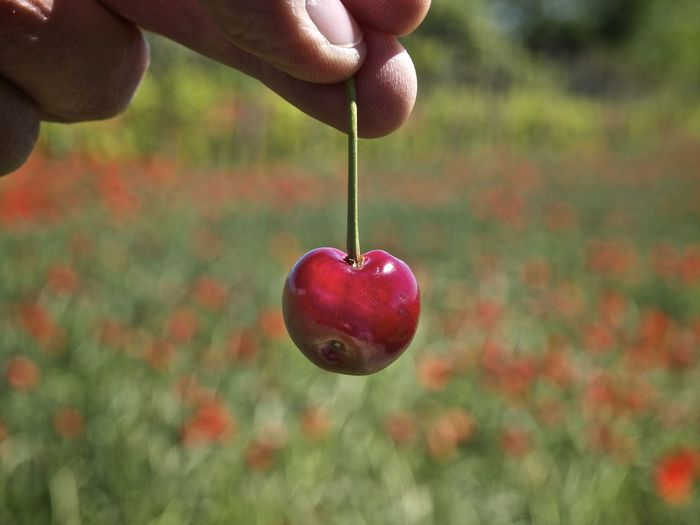 Prendimi Cherry Fruit Holding A Cherry Springtime Fingers Red Fruits Poppies
