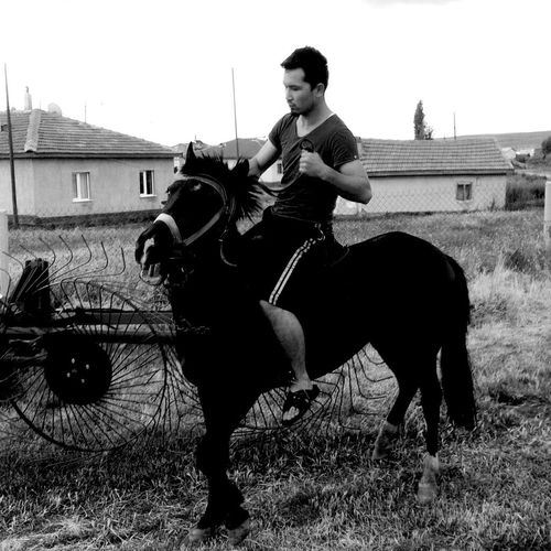 Horse That's Me Hello World