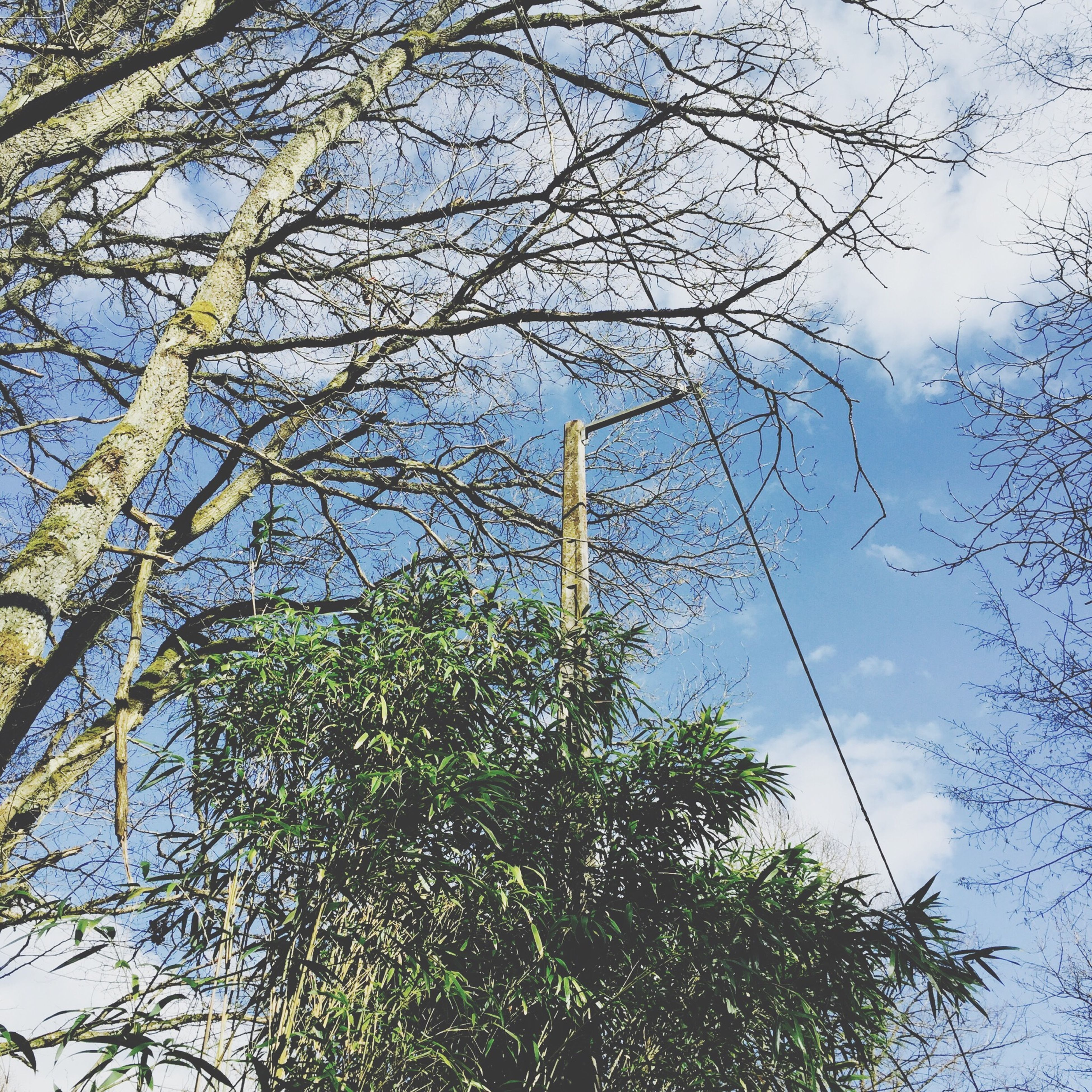 low angle view, tree, branch, sky, growth, nature, day, blue, outdoors, no people, beauty in nature, tranquility, tall - high, cloud - sky, high section, leaf, street light, green color, bare tree, cloud