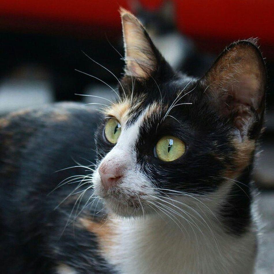 臺南 野貓