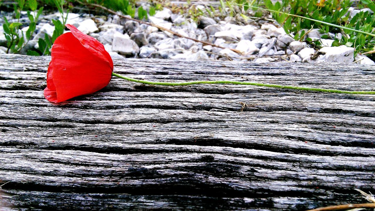 nature, red, no people, outdoors, day, leaf, autumn, close-up, beauty in nature