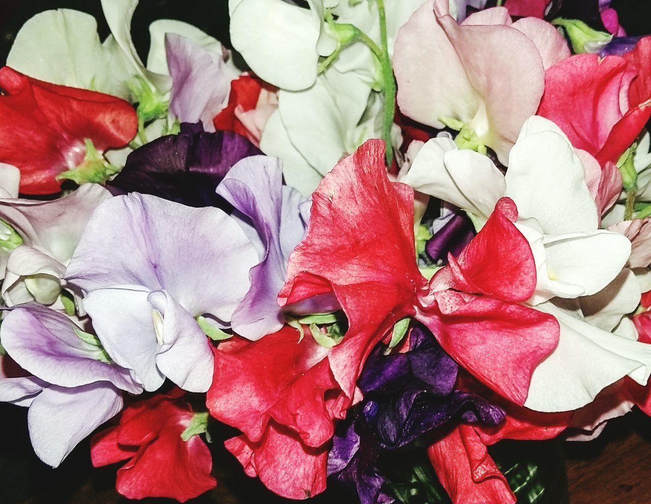 Blütenzauber MAI Flowers Zarte Blüte Colorful Frühlingsstrauss Blütenpracht Birthday Flowers Looks Like Butterfly Schmetterlingsblume