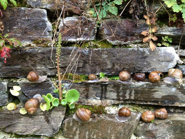 Day Escargot Fragility Large Group Of Objects Mur Nature No People Plant