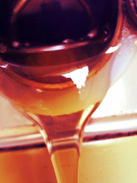 Honig Bienen  Imkerei meise3 Zwanzig15 Schleswigholstein
