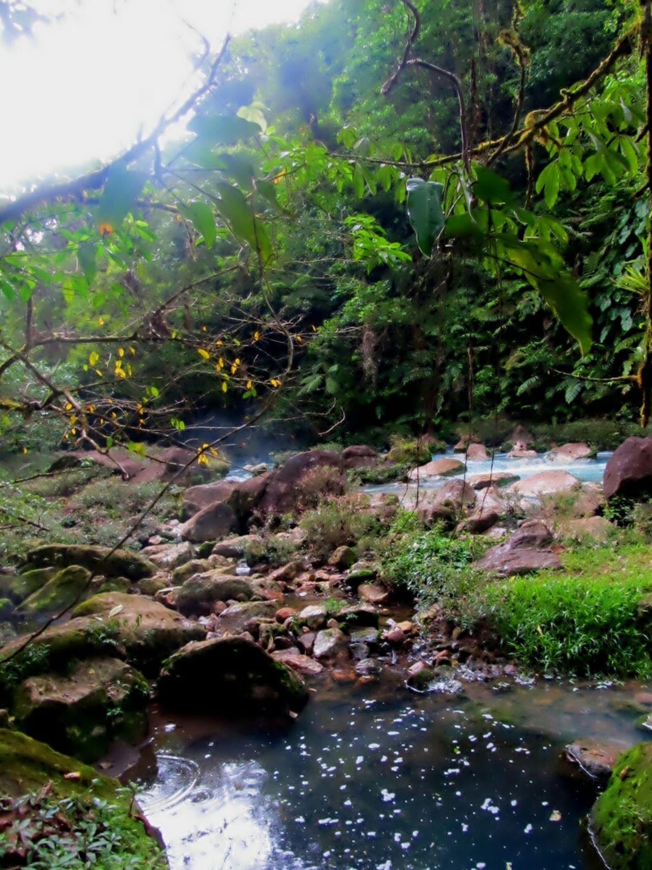 Hanging Out Naturaleza Natural Beauty Guatuso  Rio Celeste