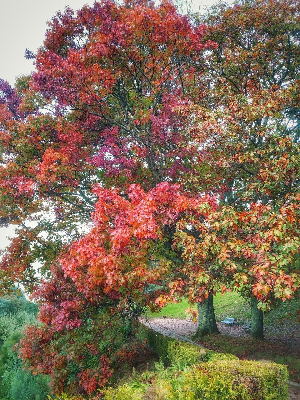 tree, growth, autumn, nature, tranquility, beauty in nature, day, no people, outdoors, plant, leaf, grass, scenics, flower, sky