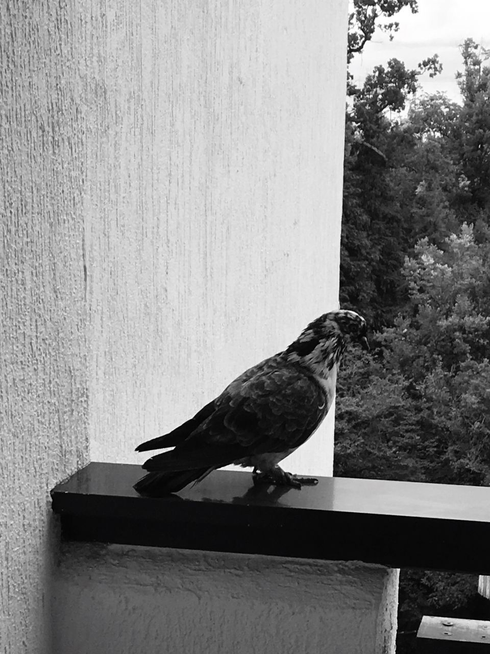 bird, animal themes, animals in the wild, one animal, perching, no people, day, animal wildlife, outdoors, built structure, nature, retaining wall, close-up