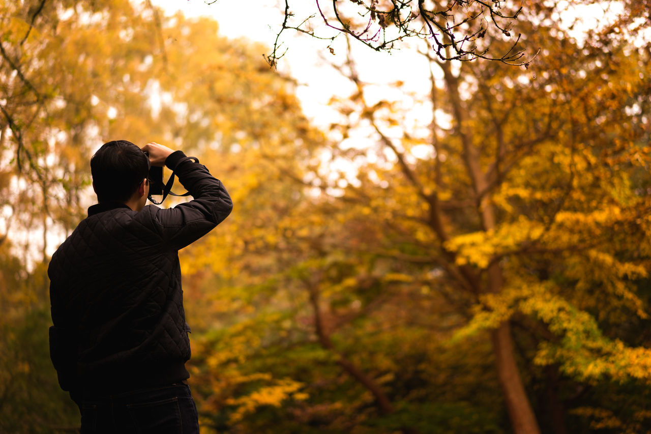 Autumn Autumn Autumn 2015 Autumn Collection Autumn Colors Autumn Leaves Autumn🍁🍁🍁 Branch Change Day Fall Beauty Fall Colors Fall_collection Forest Green Green Color Growth Lush Foliage Nature Outdoors Plant Tree Tree Trunk Winkworth Arboretum Winkworth