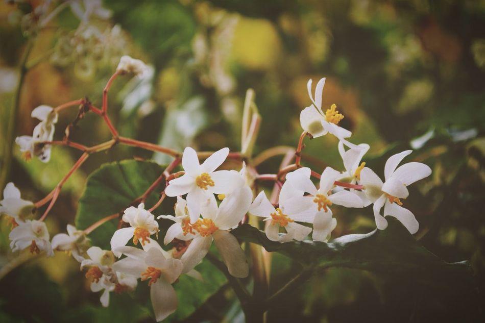 Flores • Background