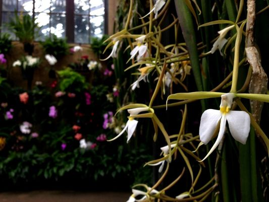 at Longwood Gardens by Jim Jannotti