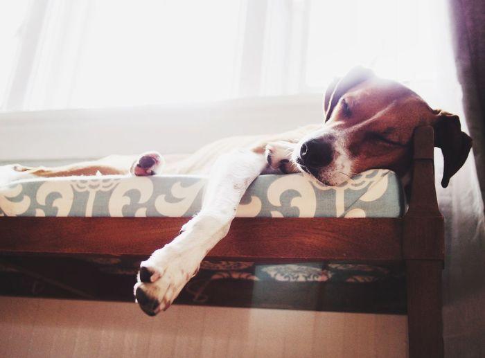 I Love My Dog Dog Window Sleeping Dog Sleeping Bright White