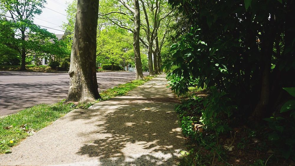 Walk Tree Footpath Nature Outdoors Tranquil Scene Growth The Way Forward Beauty In Nature Green Color No People Day Scenics Grass Sky Life Scenic Scenic View Trees Beauty In Nature Beautiful Beauty Bright Shine First Eyeem Photo