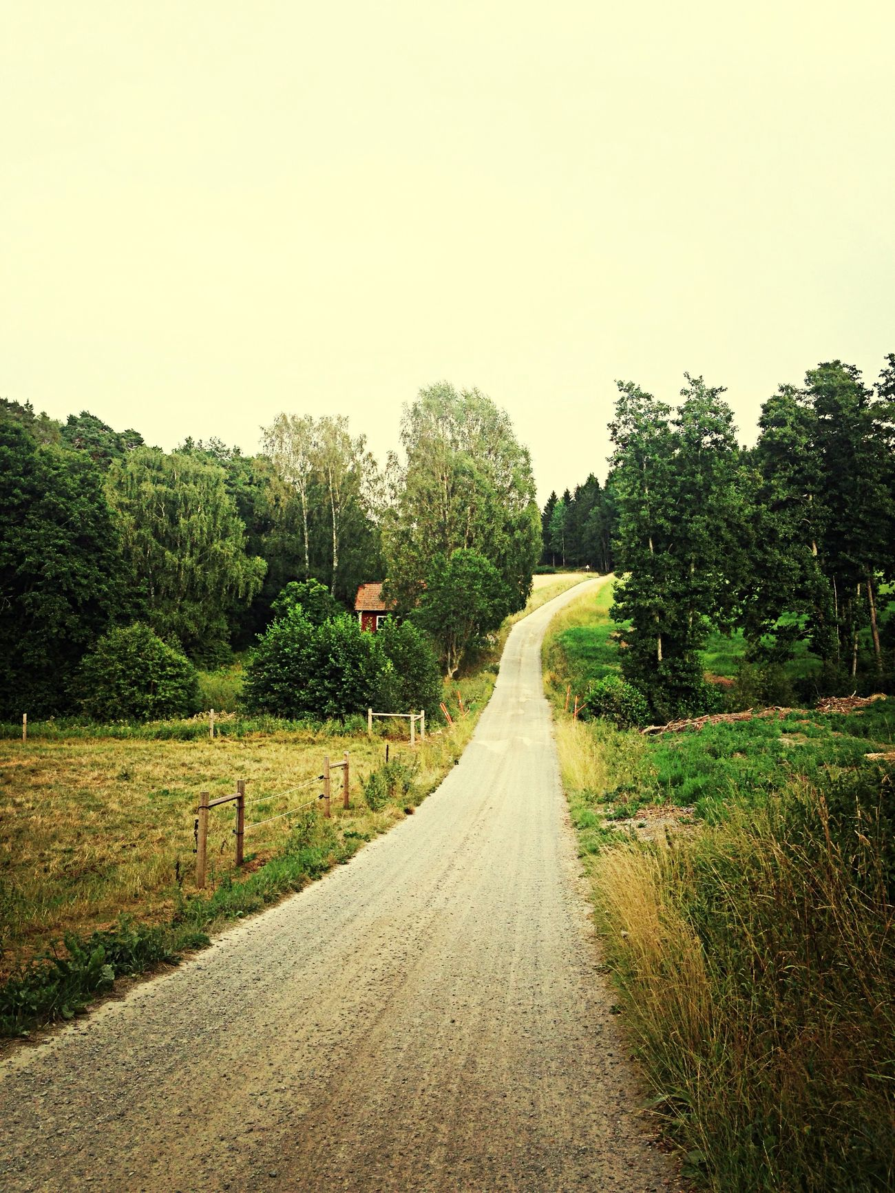 Country Road Urban Nature