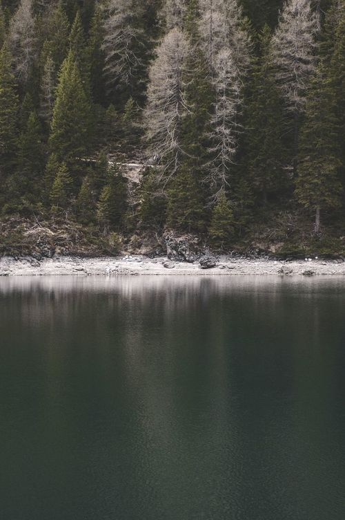 Forest on the shore. Nature Landscape Edge Of The World The Alps Forest Water The Dolomites What I Value Seeing The Sights Landscapes With WhiteWall The Great Outdoors - 2016 EyeEm Awards Nature's Diversities The Great Outdoors With Adobe