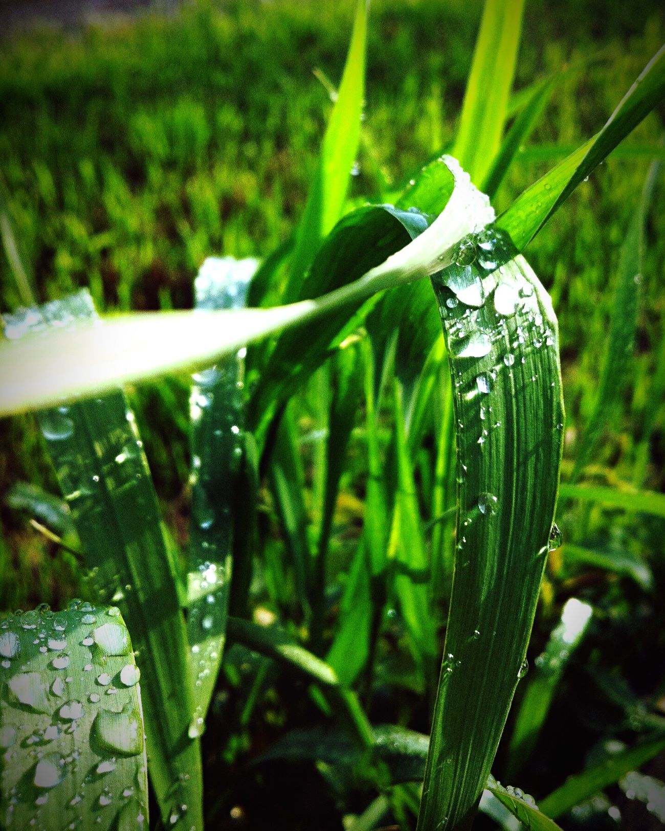 Green Color Nature Day Water Focus On Foreground Plant Beauty In Nature стебель роса утро Красоты природы 💚🌿