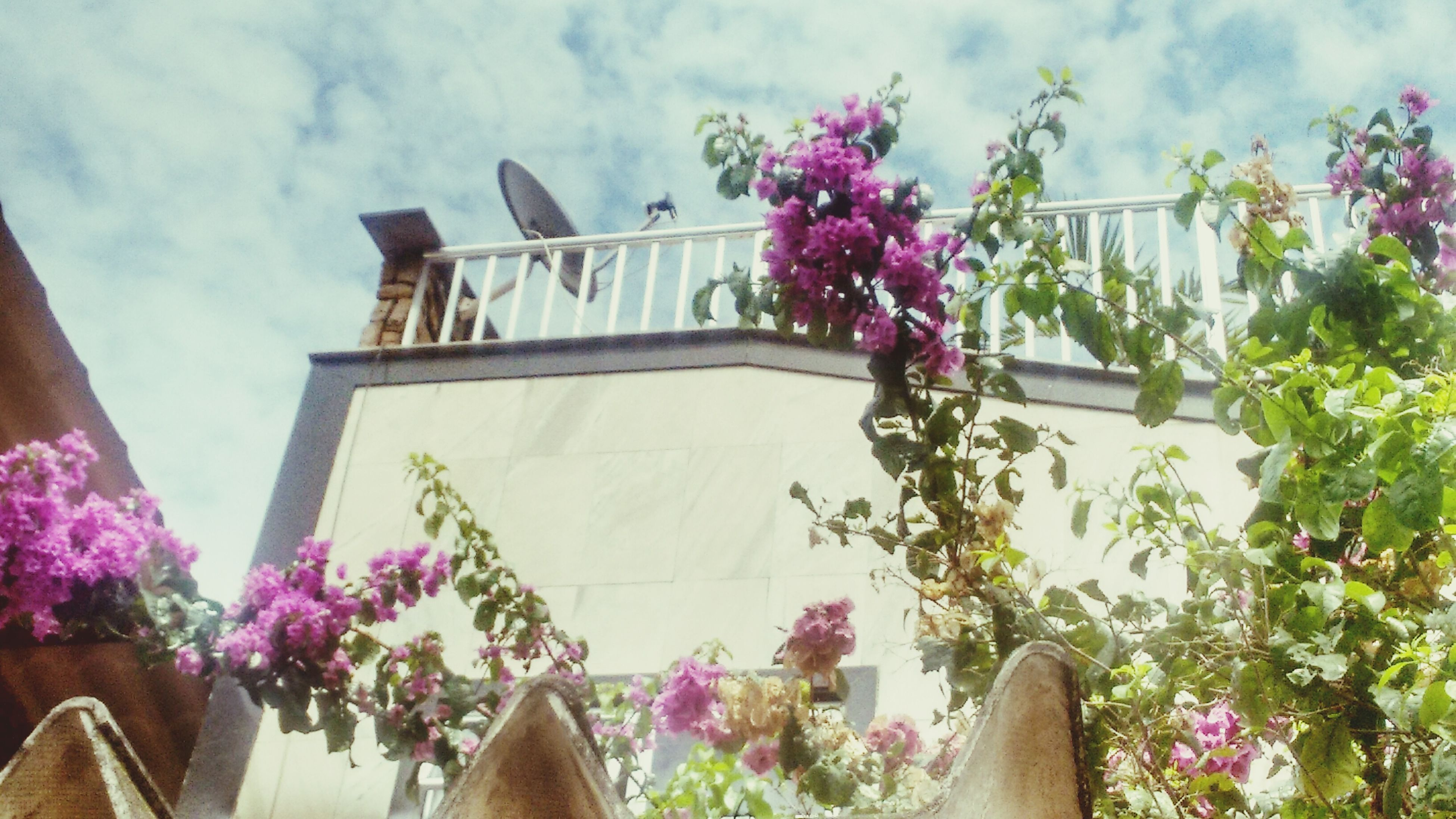 flower, freshness, built structure, low angle view, architecture, pink color, building exterior, growth, sky, fragility, plant, cloud - sky, beauty in nature, nature, in bloom, tree, day, potted plant, petal, blooming