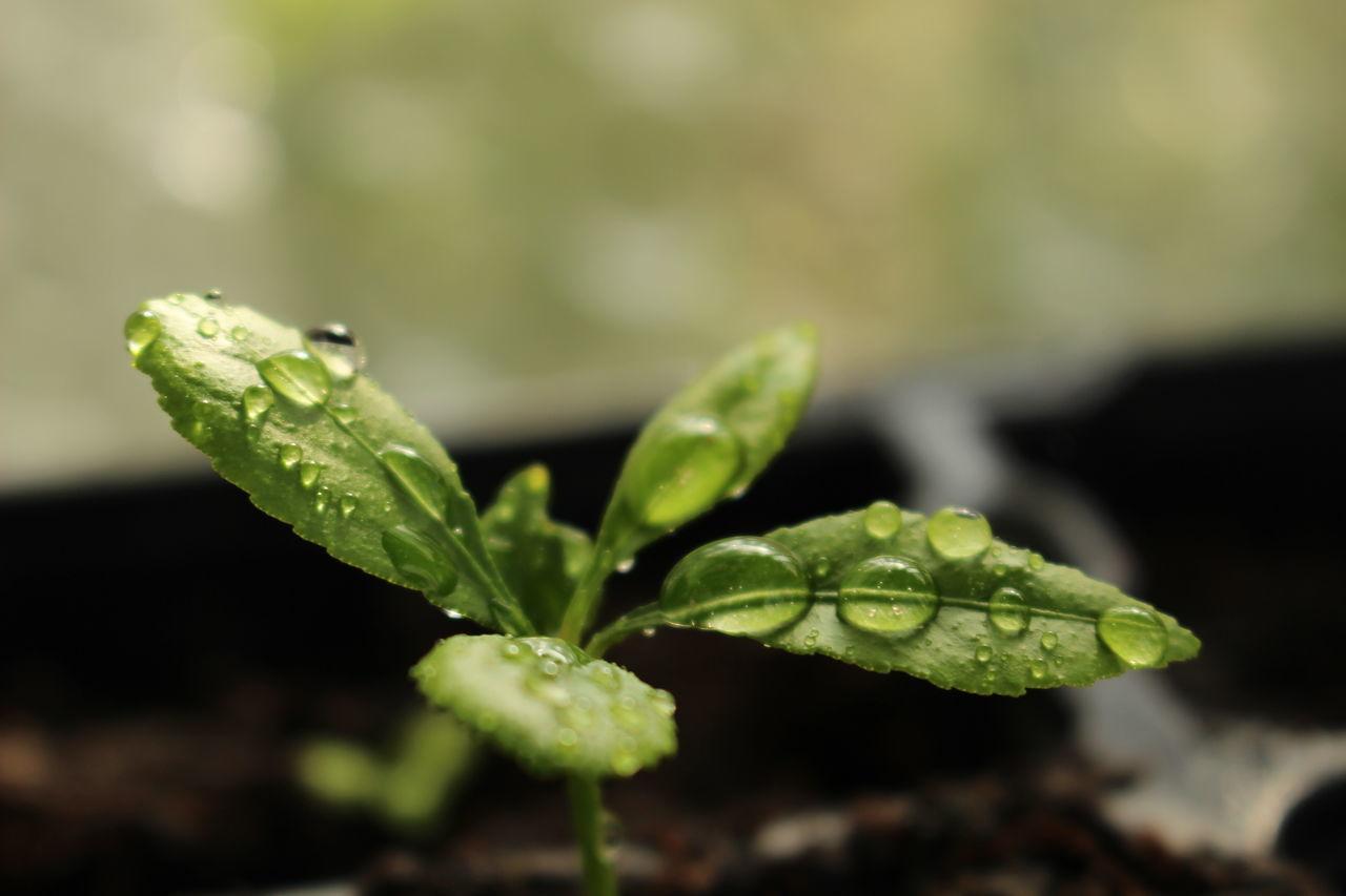 #aftertherain #dewdrops #droplets #green #macro #macrophotography #macroraindrop #purenature #raindrops #rainyday #waterdrops #waterpearls First Eyeem Photo