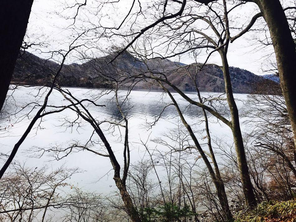 Chuzenji lake .. Nature Tree Tranquility Lake Reflection Beauty In Nature