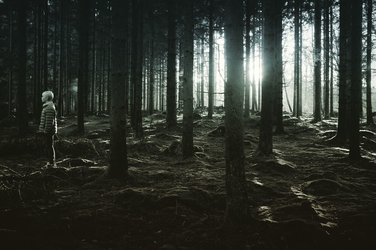 Forest WoodLand Nature Bw_collection Shootermag Beauty In Nature Monochrome Darkness And Light