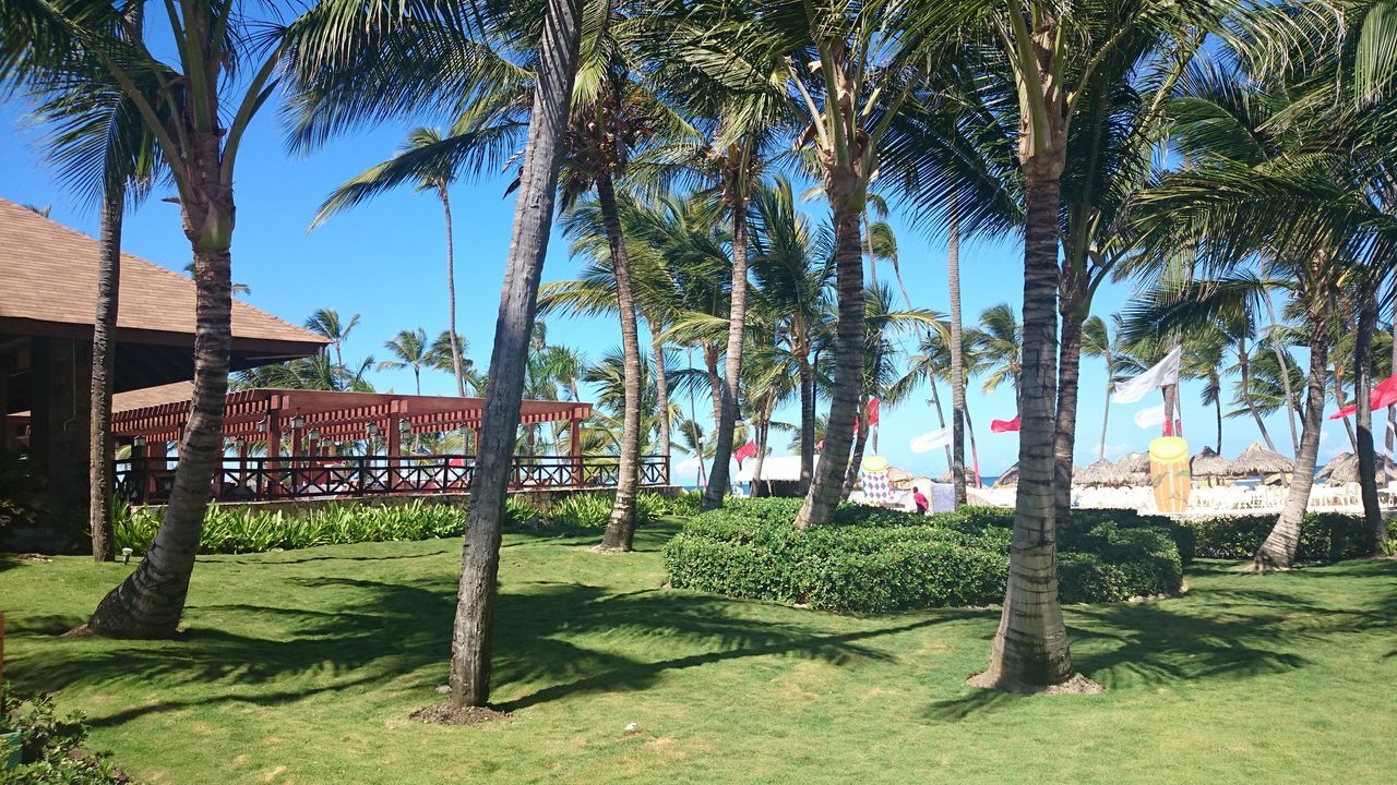 Paradise!! Tree No People Sky Growth Outdoors Green Color Grass Day Palm Tree Nature Beauty In Nature EyeEmBestPics EyeEm Best Shots First Eyeem Photo EyeEmNewHere Holiday Trip Honeymoon Travel Destinations Cultures Beauty In Nature The Way Forward TBT  Tbt ❤