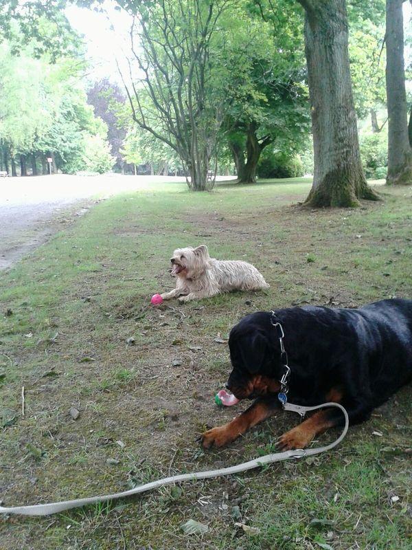 Playing With The Dog auf der Hunderunde einen guten Bekannten getroffen. Dann ein Kleine Pause gemacht. Dog❤