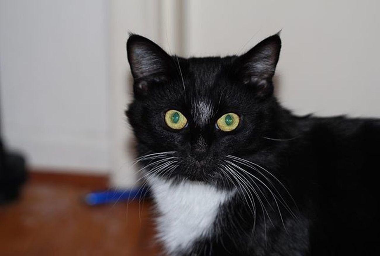 Cat Catsofinstagram Cats BLackCat Catnip Catnip just being trill