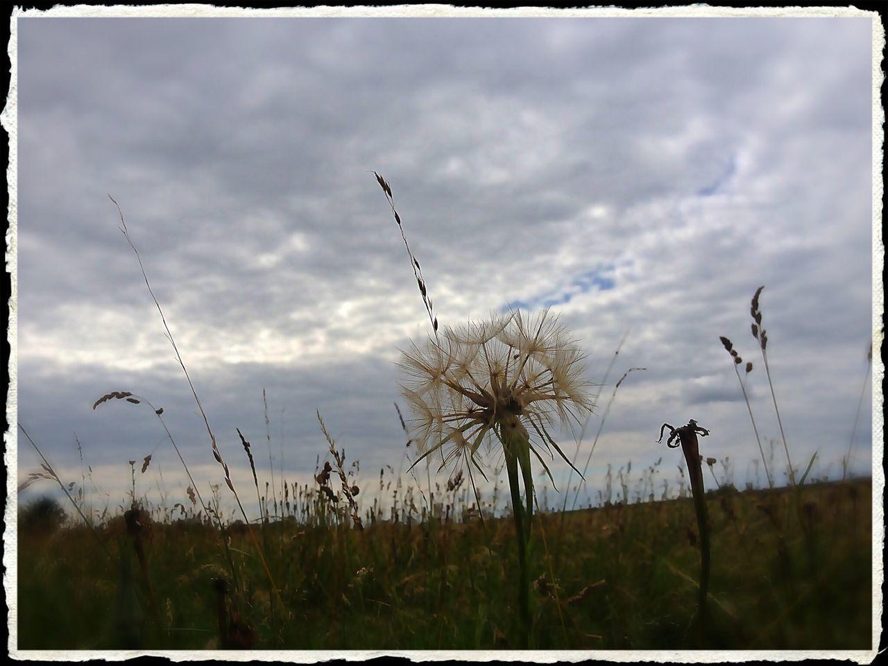Dandelion on field against cloudy sky