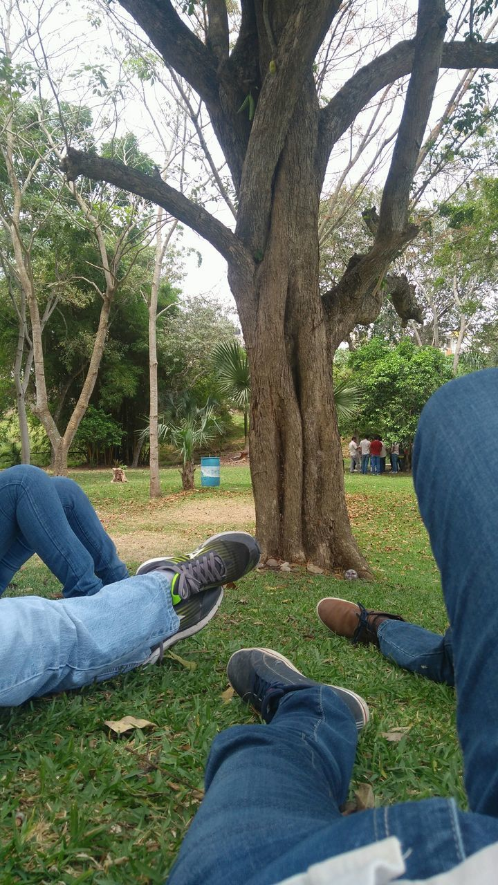 jeans, human leg, low section, human body part, shoe, two people, personal perspective, casual clothing, tree, human foot, leisure activity, togetherness, men, sitting, relaxation, real people, lifestyles, grass, day, tree trunk, outdoors, friendship, people, nature, adult, human hand, adults only