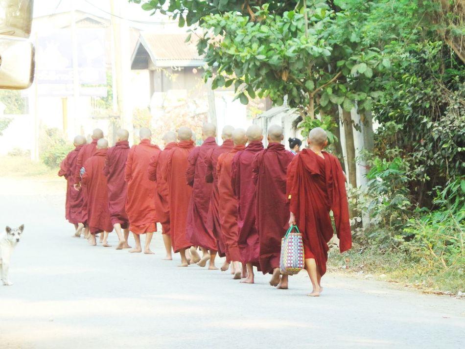Monks walk. Walking Red Outdoors Real People Monks Walk Monks In Burma Myanmar Burma