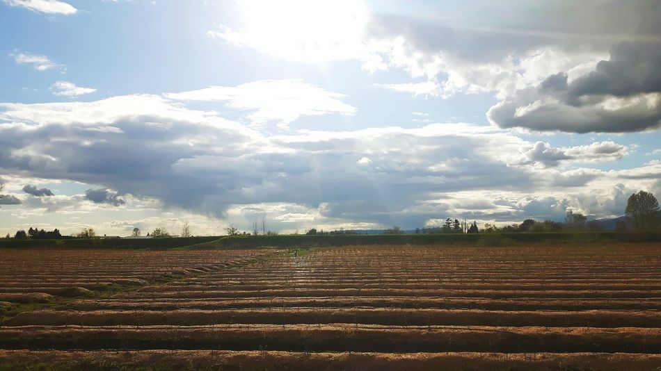 Agriculture Field Rural Scene Farm Cloud - Sky Nature Crop  Landscape Sun Growth Sunlight Beauty In Nature Outdoors Day No People Tranquil Scene Scenics Plowed Field Tree Sky