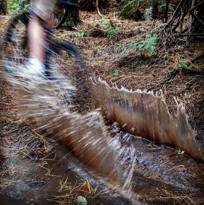 Giant Bikes Mountainbike Forest Singletrack MTB ADVENTURE Morningride🚲 Puddle