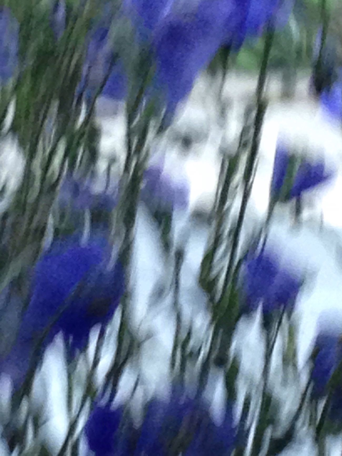 Create a feeling... inspire s mood.. reveal their essence. with a photo Love Of Flowers