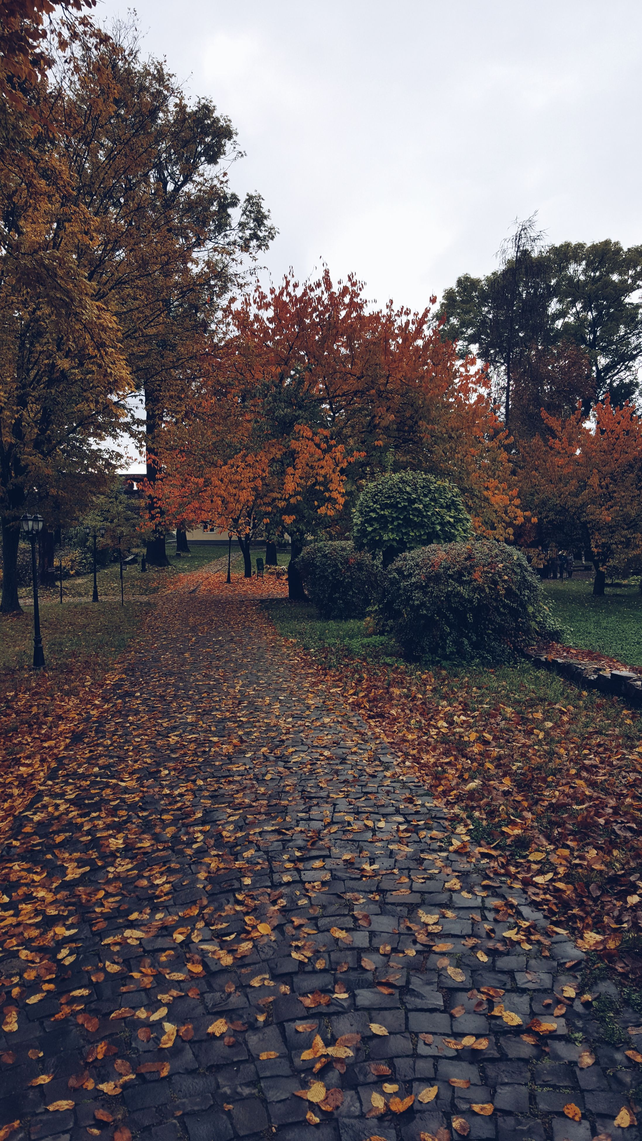 tree, sky, wet, outdoors, nature, day, water, leaf, autumn, large group of animals, no people