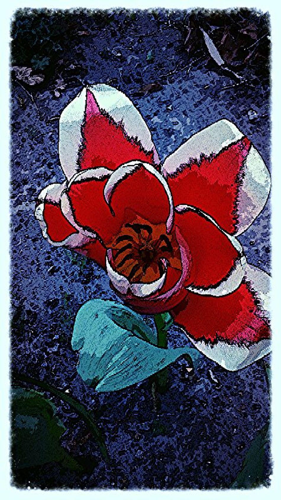 an old pic, new edit I hope you enjoy it. Taking Photos Heartflowers Instagram #followme #follow #eyeem #awesome #streamzoo #instahub #photo #sigueme #followhim #cute #follow4follow F4f Followback [ Flower Art BloomingGreat flowerforyou floweholic streamzooville flowerstream streamzoo flower