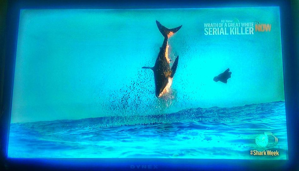 https://youtu.be/rAK0LXVMSPw Shark Week! One of my favorite times of the year, especially when Air Jaws makes an appearance. Check This Out Taking Photos On My TV Discoverychannel Amazing Nature EyeEm Animal Lover Great White Shark Save Me Learning To Fly Musical Photos Blue October Into The Ocean