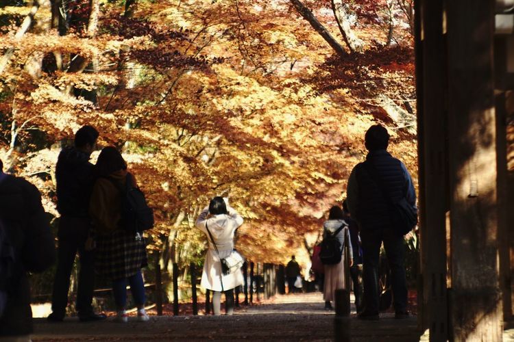 Eyeemphotography Beauty In Nature Outdoors Autumn Men Rear View Nature Real People Tree Japan Vintage Lens Jupiter9 Kyoto 光明寺 EyeEm Best Shots