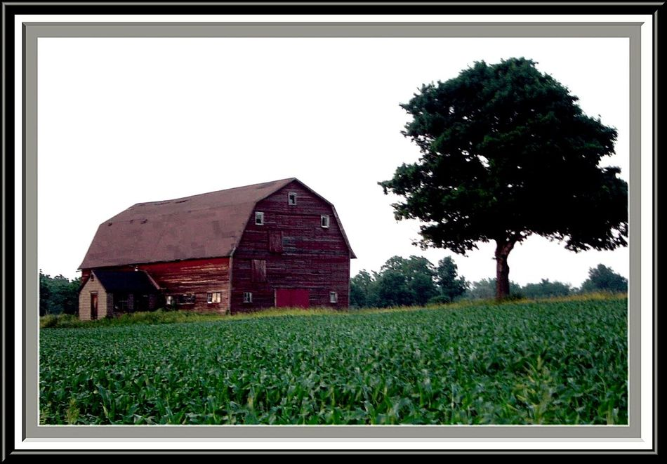 Barn in Lodi, NY which unfortunately did not last the following winter. Taking Photos First Eyeem Photo