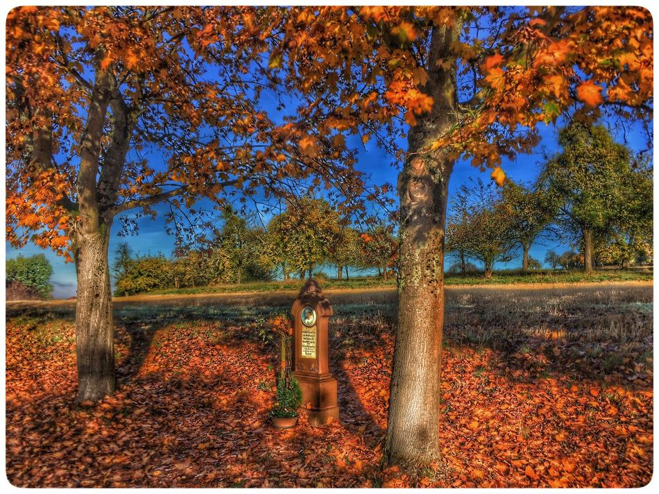EyeEm Nature Lover Tree Autumn Nature Change Outdoors No People Red Beauty In Nature Day Growth Scenics Landscape Branch Grass Fall Colors Nature Photography Red Color EyeEm Best Shots Tranquil Scene Orange Color Merzig Germany Saarland