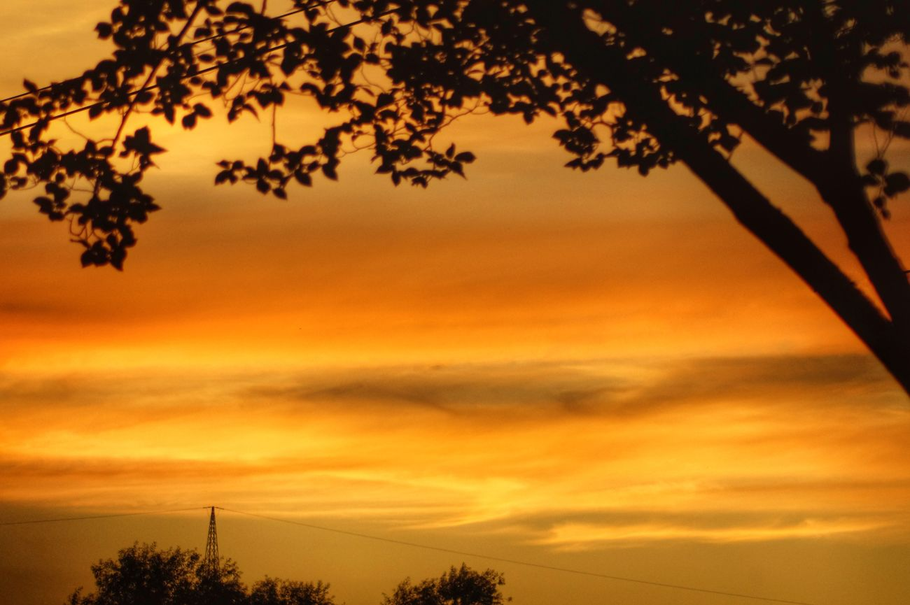 orange sunset...😍👌Tree Sunset Scenics Silhouette Orange Color Branch Tranquil Scene Beauty In Nature Idyllic Tranquility Cloud - Sky Sky Romantic Sky Nature Atmosphere Majestic Dramatic Sky Atmospheric Mood Treetop Distant Having A Good Time Outdoors From Where I Stand Nature's Diversities EyeEm Best Shots