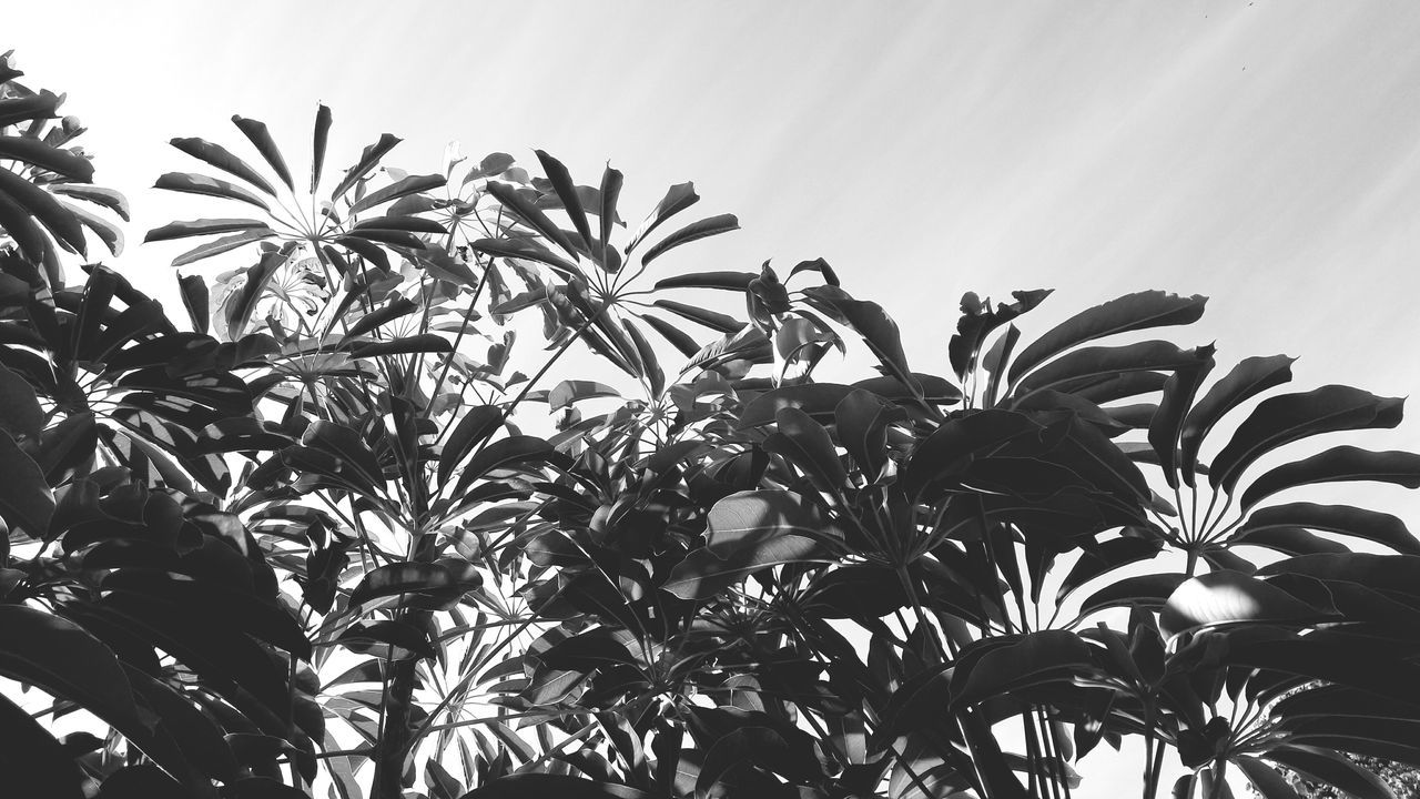 Leaf Agriculture Social Issues Crop  Food Tree Nature Plant Growth Sky Palm Tree Low Angle View Beauty In Nature New On Eyeem Benalmádena, Malaga, Spain Spaın Summer Nature Green Color No People Freshness Food Staple Outdoors Day Close-up