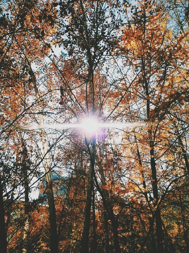 Beatiful Nature Autumn Leaves Leaves Are Falling Autumn Colors