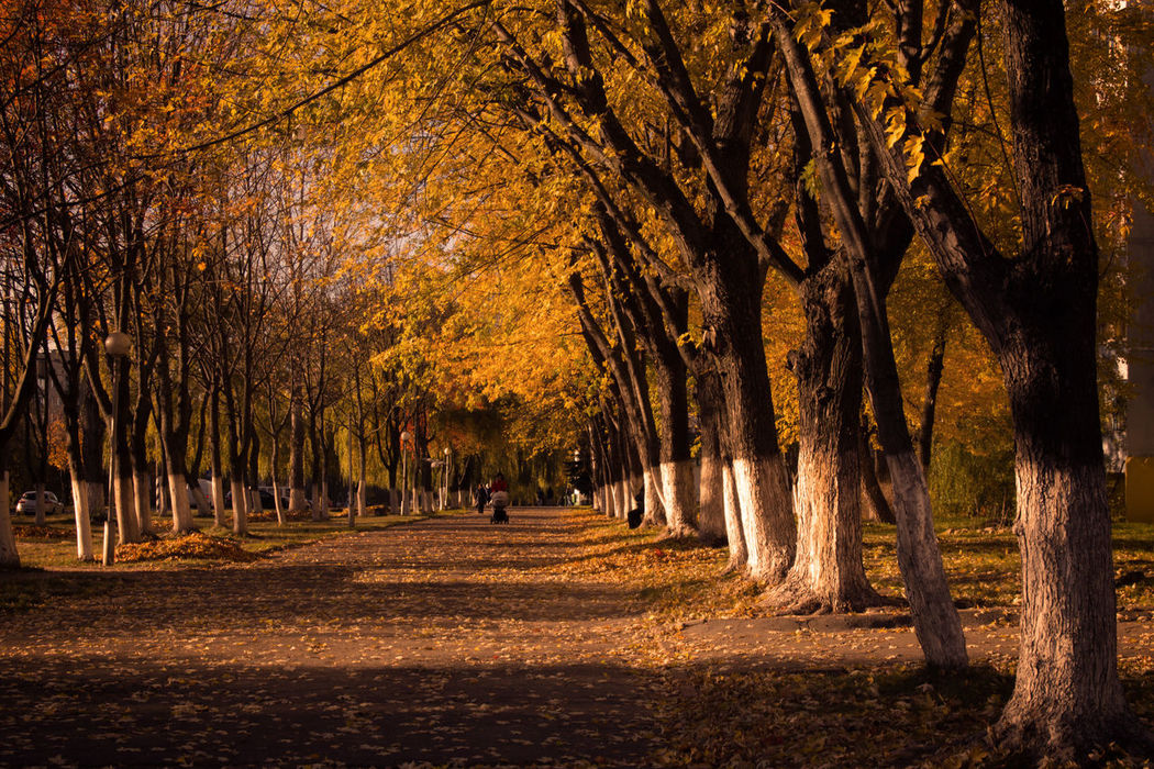 Autumn Boulevard Autumn Colors Belarus Change EyeEm Nature Lover Fall Beauty Forest Lens Flare Long Exposure Mazyr Motion Mystery Narrow Nature Outdoors Park Spraying Sun Sunbeam Sunny The Way Forward Tranquility Tree Tree Trunk