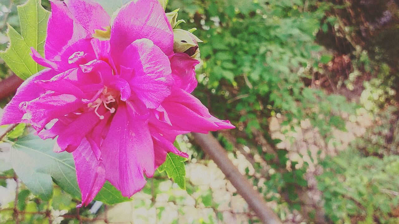 Flowers In My Garden Nature Photography Check This Out Relaxing First Eyeem Photo