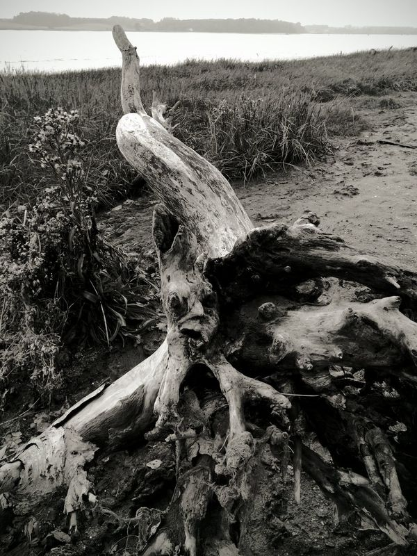 Nature Textures And Surfaces River View Riverbank View Driftwood Deben River, Suffolk Landscape Photography Blackandwhite Photography
