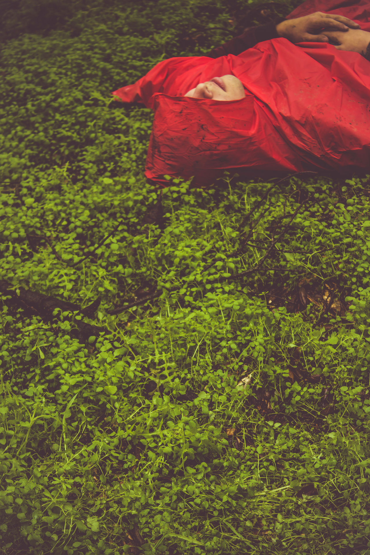 She stole the hood from me Truestory Green Color Nature Portrait No Faces Beauty In Nature Day Outdoors Grass Red Complimentary Colors