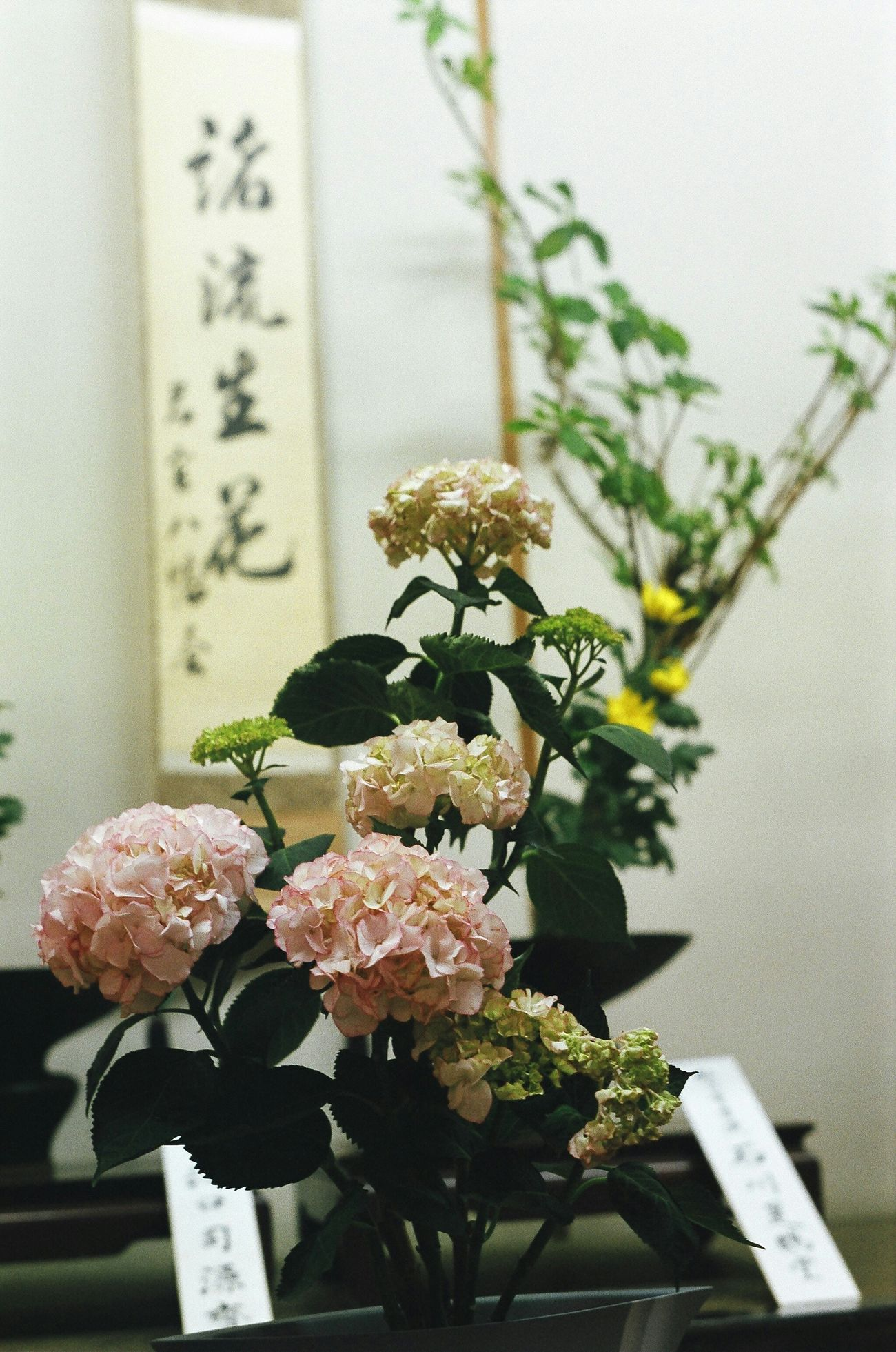 Japan Art IKEBANA 若宮祭 生け花 Nagoya My Country In A Photo Flowers