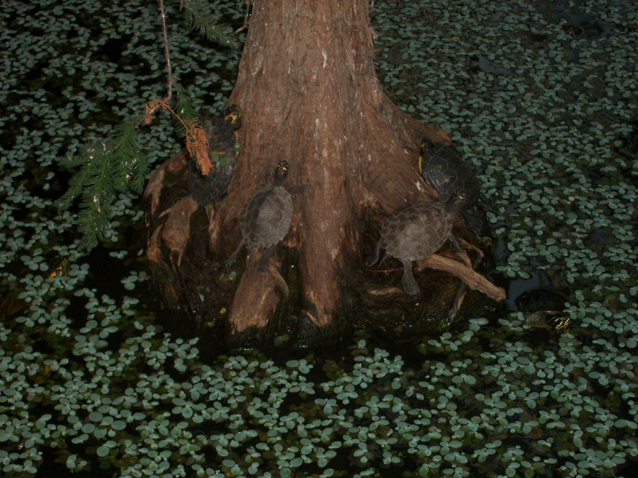 Atocha Train Station Atocha Beauty In Nature Close-up Indoor Nature No People Tree Tree Trunk Turtle