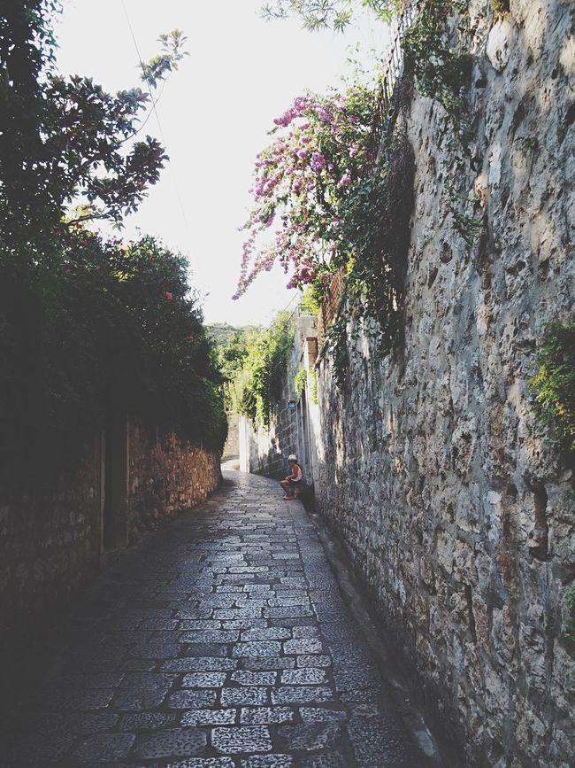 The Way Forward Tree Narrow Day Flower Long No People Diminishing Perspective Pedestrian Walkway