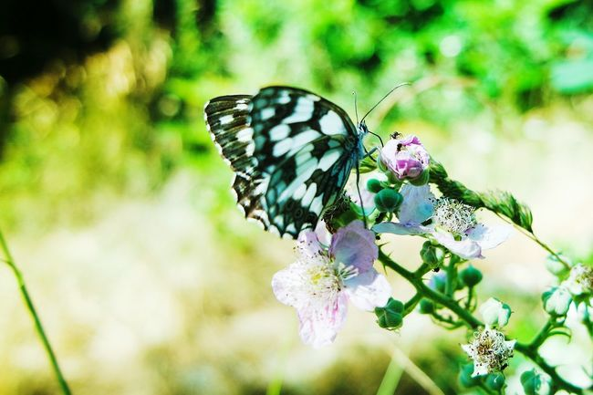 A Butterfly and a Ant Insects  Taking Photos 43 Golden Moments Open Edit Fresh 3 EyeEm Best Shots Eye4photography  Showcase July Nature Photography Nature_collection Macro_collection Macroclique Flowers, Nature And Beauty